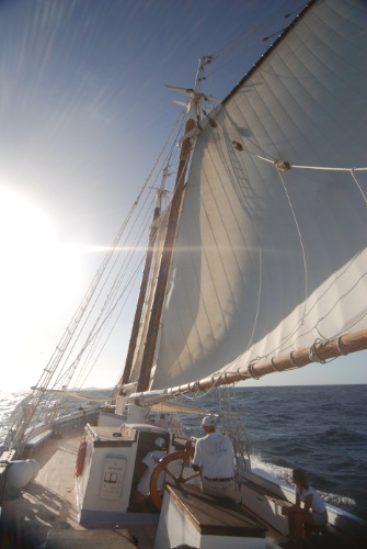 Friendship Rose Under Sail